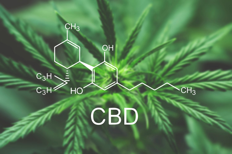 Using A CBD Distillate To Counteract The Intensity Of THC